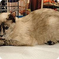Adopt A Pet :: Marissa - Columbus, GA