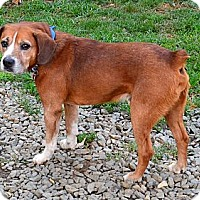 Adopt A Pet :: Rocky - Bakersville, NC