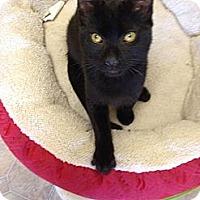 Adopt A Pet :: Amos - Mobile, AL