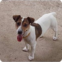 Adopt A Pet :: Minka in Houston - Houston, TX