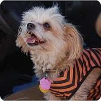 Adopt A Pet :: Niaya - Golden Valley, AZ