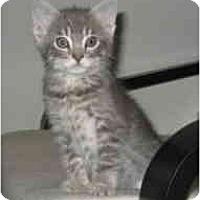 Adopt A Pet :: Roo - Davis, CA