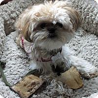 Adopt A Pet :: BETTY-pending - Eden Prairie, MN