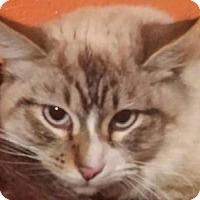 Adopt A Pet :: Lyre - Ennis, TX