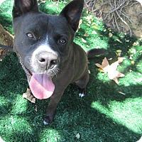 Adopt A Pet :: Marco - Chula Vista, CA