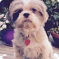 Adopt A Pet :: Fancy Nancy LOVES EVERYONE! - Los Angeles, CA