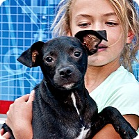 Adopt A Pet :: Jack - Cashiers, NC