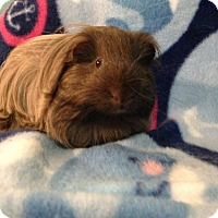 Adopt A Pet :: Duke - Coral Springs, FL