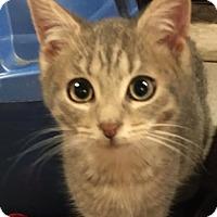 Adopt A Pet :: Skeeter (Rocky) - Ortonville, MI