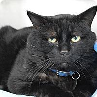 Adopt A Pet :: Bentley - Monroe, MI