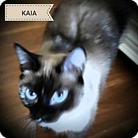 Adopt A Pet :: Kaia - Fairborn, OH