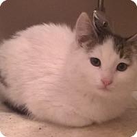 Adopt A Pet :: Prince-Adoption Pending! - Colmar, PA