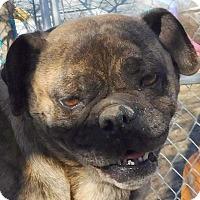 Adopt A Pet :: Briane - MINNEAPOLIS, KS
