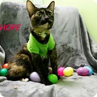 Adopt A Pet :: hope - Muskegon, MI