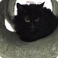 Adopt A Pet :: Jackie - Diamond Springs, CA