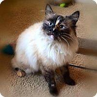 Adopt A Pet :: Bobbi - Cumming, GA
