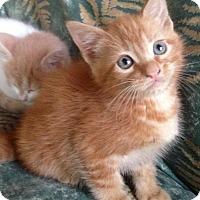 Adopt A Pet :: Nacho - Potomac, MD