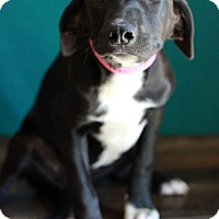 Adopt A Pet :: Jilly - Waldorf, MD