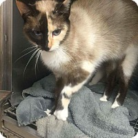 Adopt A Pet :: Sally Jane - Fairborn, OH