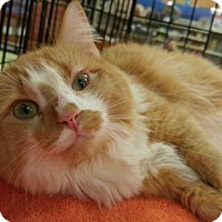 Adopt A Pet :: DOLLY - Powder Springs, GA