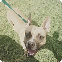 Adopt A Pet :: Texas - Phoenix, AZ