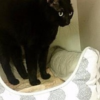 Adopt A Pet :: Mocha - Westbury, NY