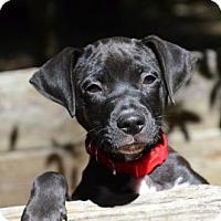 Adopt A Pet :: Addie - Willingboro, NJ