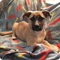Adopt A Pet :: Becker - New Oxford, PA