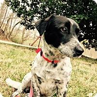 Adopt A Pet :: LEVI - Salem, NH