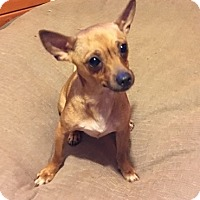 Adopt A Pet :: Rosetta - Temecula, CA