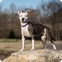 Adopt A Pet :: SOPHIE - Milwaukee, WI