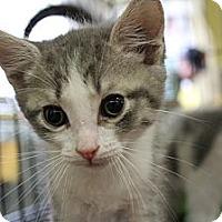 Adopt A Pet :: Simon - Santa Monica, CA