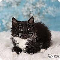 Adopt A Pet :: Indigo - Eagan, MN