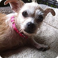 Adopt A Pet :: Ragamuffin - Nashville, TN