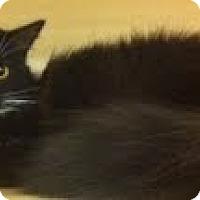 Adopt A Pet :: Sweetie - Modesto, CA