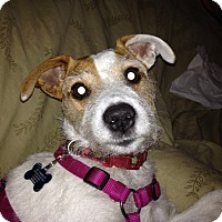 Adopt A Pet :: Edwina - Washington, PA