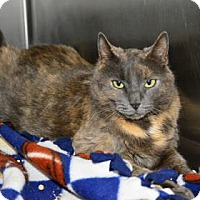 Adopt A Pet :: Pinestraw - Suwanee, GA
