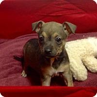 Adopt A Pet :: Midnight Special in Texarkana Texas - Texarkana, TX