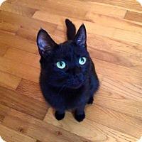 Adopt A Pet :: Bella - Sterling Heights, MI