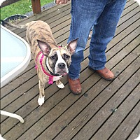 Adopt A Pet :: Zoey - Bellingham, WA