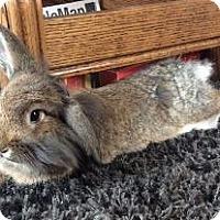 Adopt A Pet :: Seamus - Woburn, MA