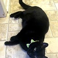 Adopt A Pet :: Kanga - Stevensville, MD
