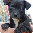 Adopt A Pet :: Gage (3 lb)