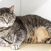 Adopt A Pet :: Fuzzy - Atlanta, GA