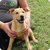 Adopt A Pet :: Jace - New Oxford, PA