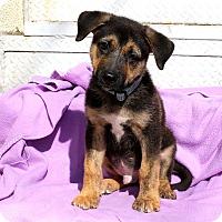 Adopt A Pet :: Auckland - Los Angeles, CA