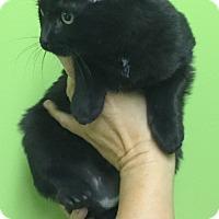 Adopt A Pet :: Daisy - Hibbing, MN