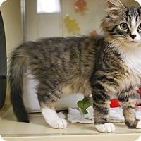 Adopt A Pet :: Emperor - New Castle, PA