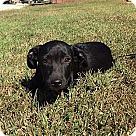 Adopt A Pet :: Bixby