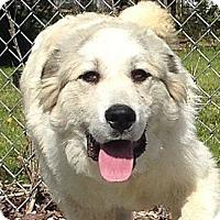 Adopt A Pet :: Clifford - Harrisonburg, VA